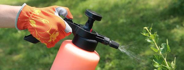 Боротьба з тлею на садовій ділянці: хімія проти народних засобів