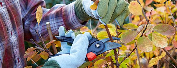 Чек-лист по работе в саду и огороде в октябре