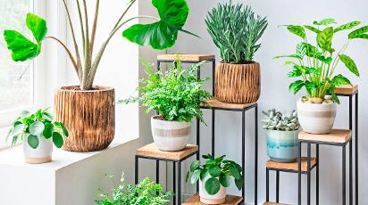 7 золотих правил догляду за кімнатними рослинами