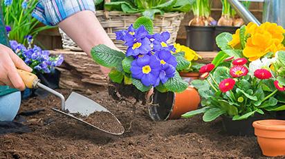 Топ 10 лайфхаків осінньої посадки для садівників-початківців