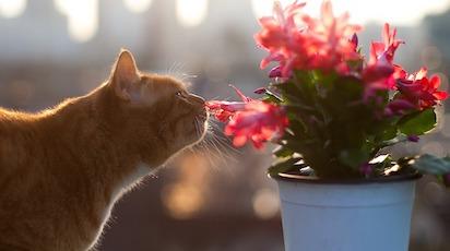 Як захистити рослини від домашніх тварин: ефективні прийоми