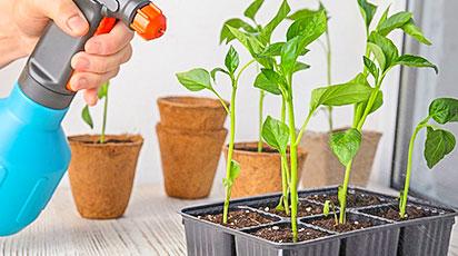 Когда сажать семена на рассаду: рекомендации опытных садоводов