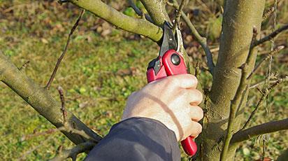Обрізка дерев і кущів навесні – освоюємо тонкощі процесу