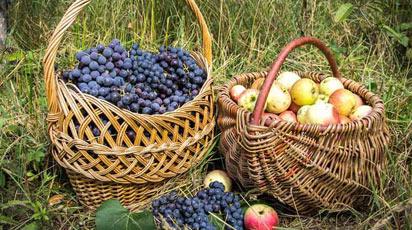В гостях у покупця: урожайний сад Валентини Курганської