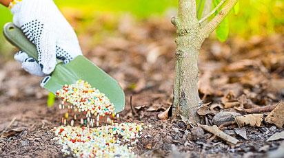 Весняна підгодівля плодових дерев і кущів — пам'ятка для садівника