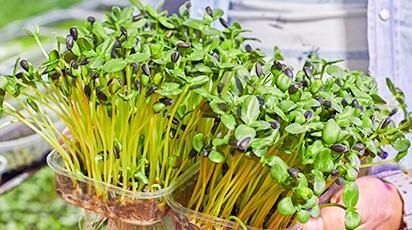 Як виростити мікрозелень у домі: 6 простих способів
