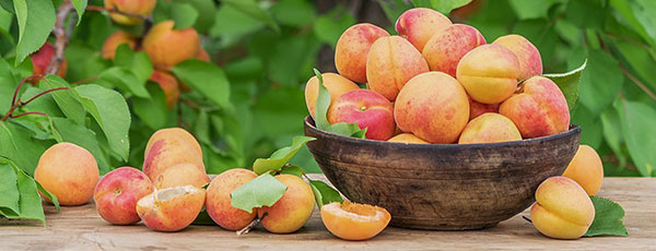 Хвороби та шкідники абрикоса: як розпізнати й боротися з ними
