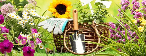 Липень: 30 важливих справ в саду, на городі й у квітнику