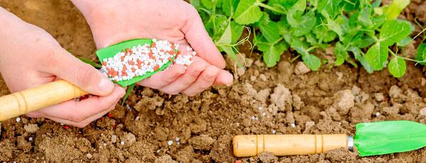 Підживлення навесні - види добрив для саду та городу