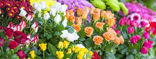Посадка троянд восени – покрокова інструкція для новачків