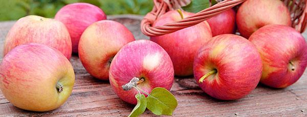 Яблука без черв'яків: як позбутися шкідників у саду