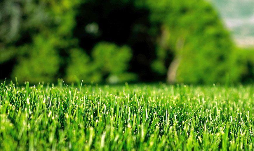 Як доглядати за газоном влітку, щоб він був красивим та акуратним