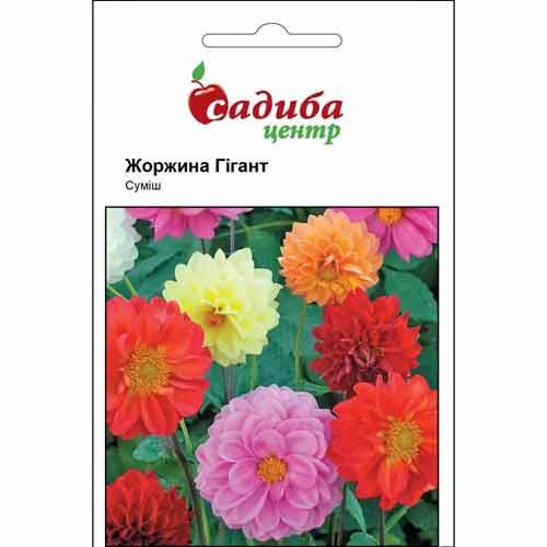 Георгина Гигант, смесь окрасок Садыба центр рисунок 1 артикул 89211