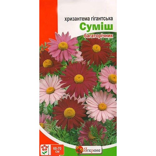 Хризантема Гігантська, суміш забарвлень Яскрава зображення 1 артикул 72632