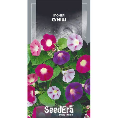 Ипомея, смесь окрасок Seedera рисунок 1 артикул 89942