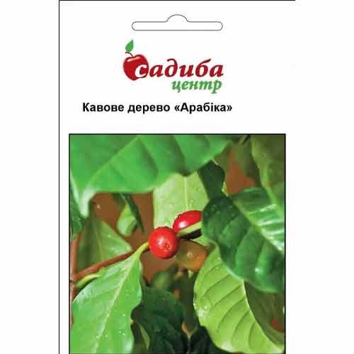 Кофейное дерево Арабика Садыба центр рисунок 1 артикул 89248