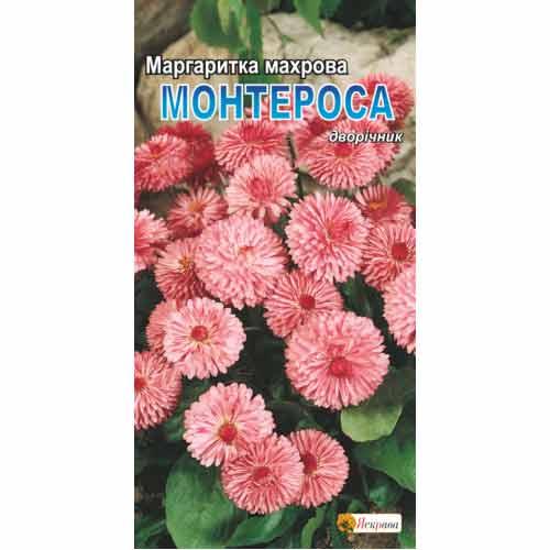 Маргаритка Монтеросса Яскрава рисунок 1 артикул 77049