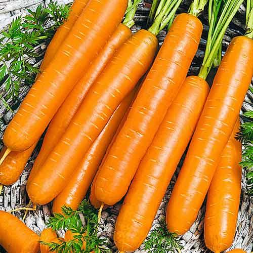 Морковь Без сердцевины Seedera рисунок 1 артикул 65562