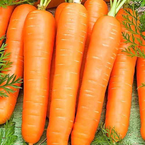 Морква Вітамінна 6 Seedera зображення 1 артикул 65564