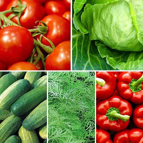Набір насіння Бочкові соління з 5 упаковок, суміш сортів Seedera зображення 1 артикул 72912