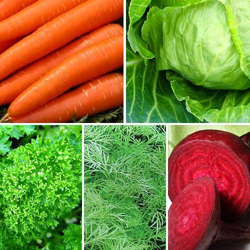 Набір насіння для борщу з 5 упаковок, суміш сортів Seedera зображення 1 артикул 72911
