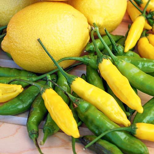 Перець гострий Гарячий лимон Seedera зображення 1 артикул 72423