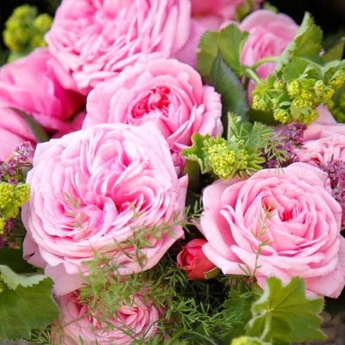 Троянда флорібунда Саммер Романс