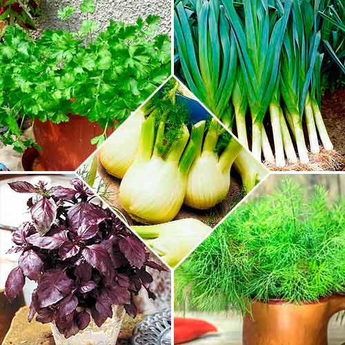 Набір насіння Прянощі до салатів з 5 упаковок, суміш сортів Seedera зображення 1 артикул 72361