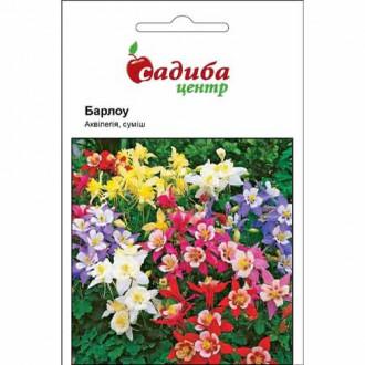 Аквилегия Барлоу, смесь окрасок Садыба центр рисунок 4
