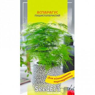 Аспарагус декоративний Seedera зображення 1