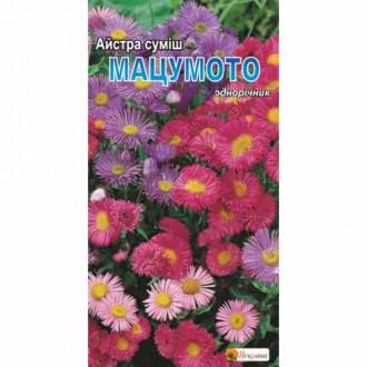 Астра Мацумото, смесь окрасок Яскрава рисунок 4