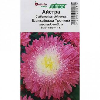 Айстра Шанхайська Троянда біла Садиба центр зображення 5