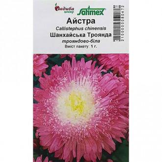 Айстра Шанхайська Троянда рожево-біла Садиба центр зображення 7