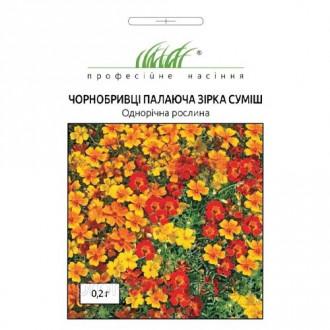 Чорнобривці Палаюча зірка, суміш забарвлень Професійне насіння зображення 5