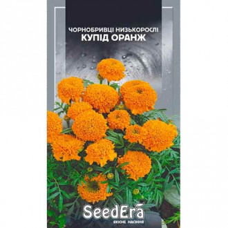 Бархатцы Купид оранж Seedera рисунок 2