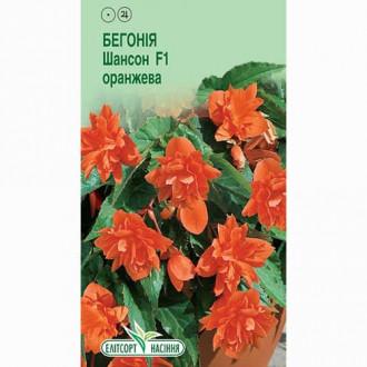 Бегонія Шансон помаранчева F1 Елітсорт зображення 1