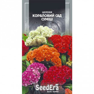 Целозія гребінчаста Кораловий сад, суміш забарвлень Seedera зображення 5