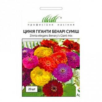 Цинния Гиганты Бенари, смесь окрасок Профессиональные семена рисунок 7