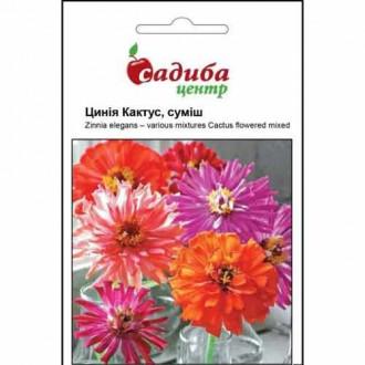 Цинния Кактус, смесь окрасок Садыба центр рисунок 8