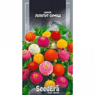Цинния Лилипут, смесь окрасок Seedera рисунок 2