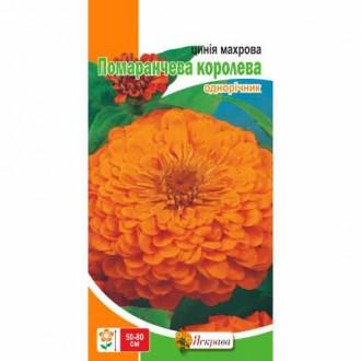 Цинния Оранжевая Королева Яскрава рисунок 6