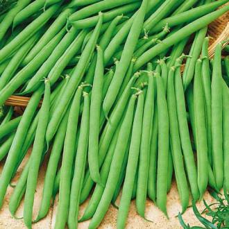 Квасоля овочева Еурека Seedera зображення 3