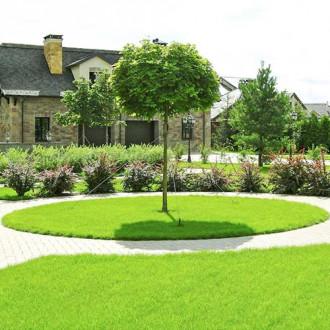 Газонна травосуміш Англійський Сад Seedera зображення 7