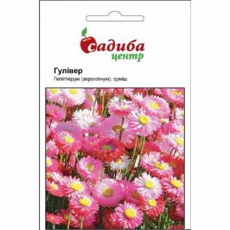 Гелиптерум Розеум Гулливер, смесь окрасок Садыба центр рисунок 1