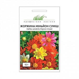 Жоржина Міньйон, суміш забарвлень Професійне насіння зображення 3