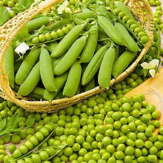 Горох Овощное чудо Seedera рисунок 4