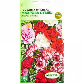 Гвоздика махрова Турецька, суміш забарвлень Seedera зображення 2