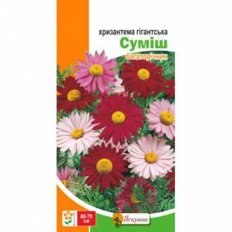 Хризантема Гігантська, суміш забарвлень Яскрава зображення 1