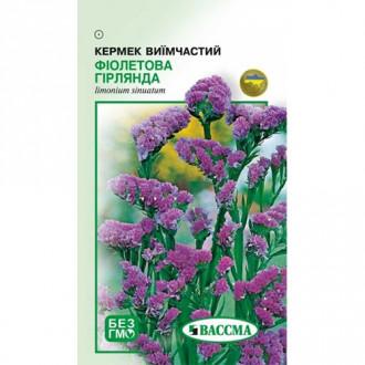 Кермек Фиолетовая гирлянда Seedera рисунок 6