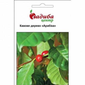 Кавове дерево Арабіка Садиба центр зображення 1